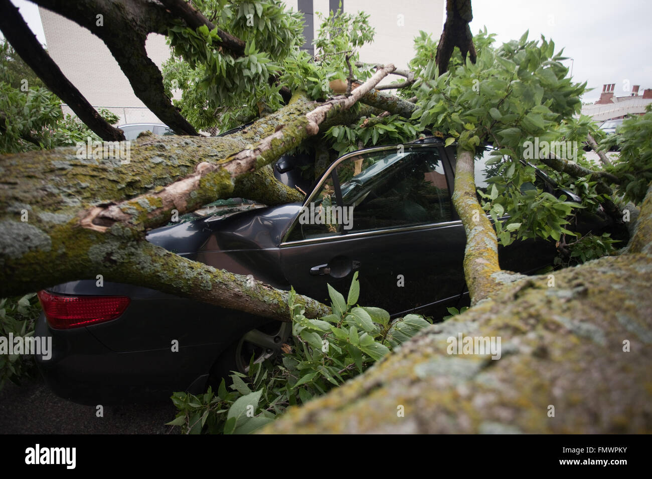 Smashed car from a large fallen tree in Kansas City, Missouri. Stock Photo