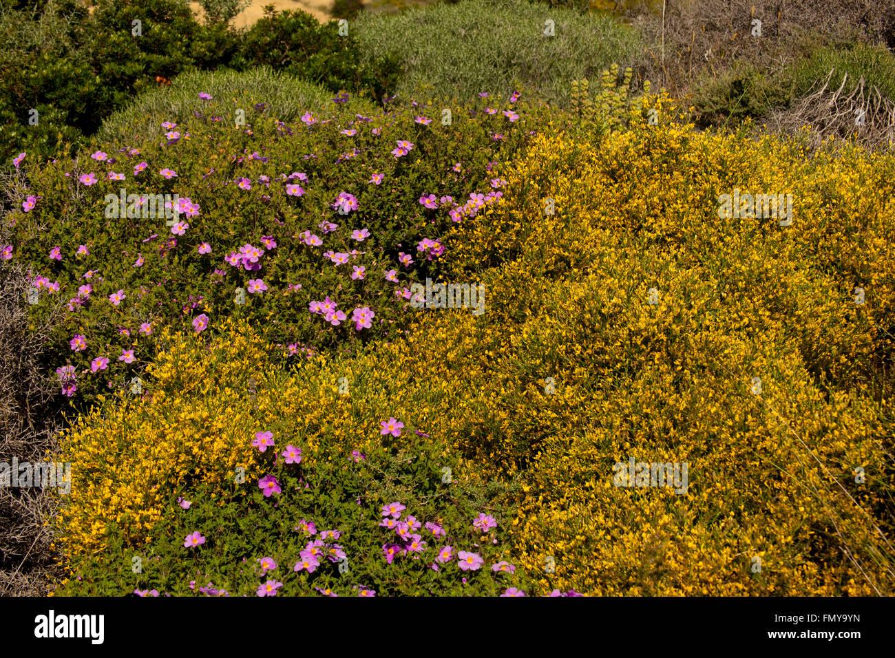 Griechenland, Kykladen, Paros, Südostküste, Macchie - Stock Image