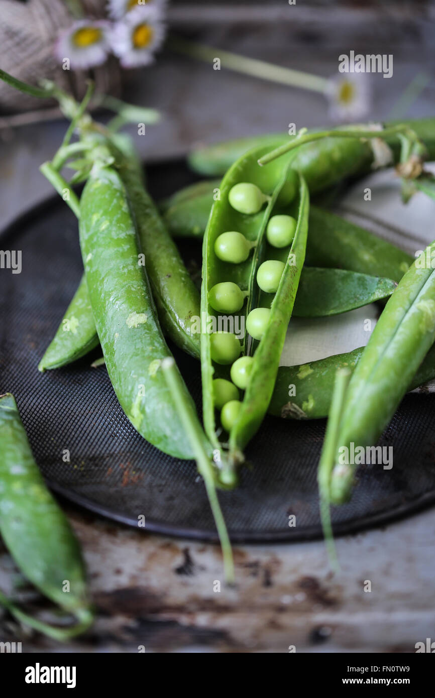 Fresh peas on a grey background - Stock Image