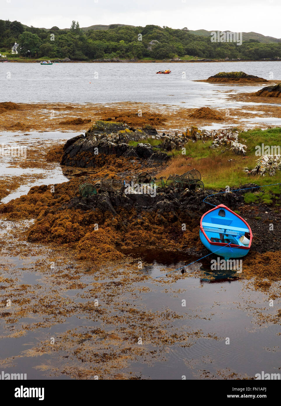 Blue rowing boat ashore amisdst colourful seaweed - Loch nan Ceall  - Arisaig harbour, Lochaber, Highland Scotland Stock Photo
