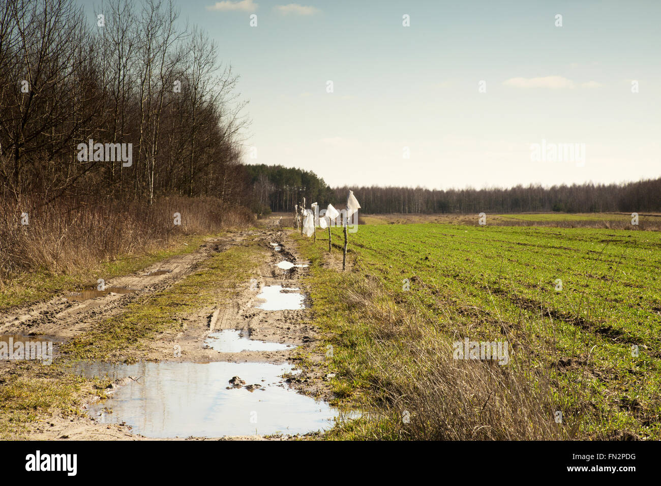 Poland, image of muddy and full of puddles road leading into the distance, a piece of winter wheat field, in early Stock Photo