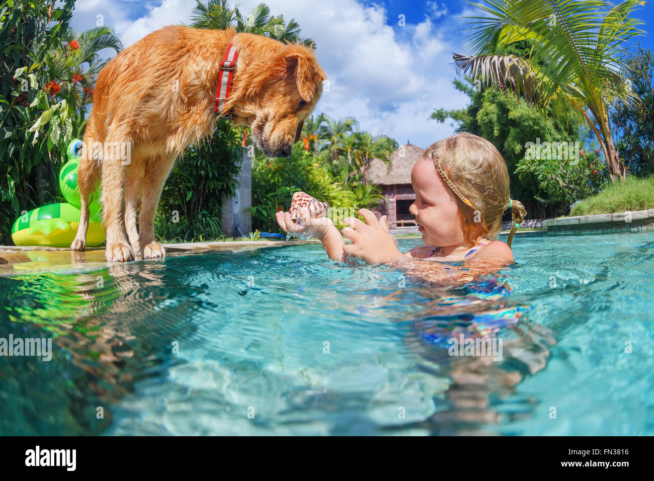 Little child play with fun and train golden labrador retriever puppy in swimming pool -  dive underwater to retrieve - Stock Image
