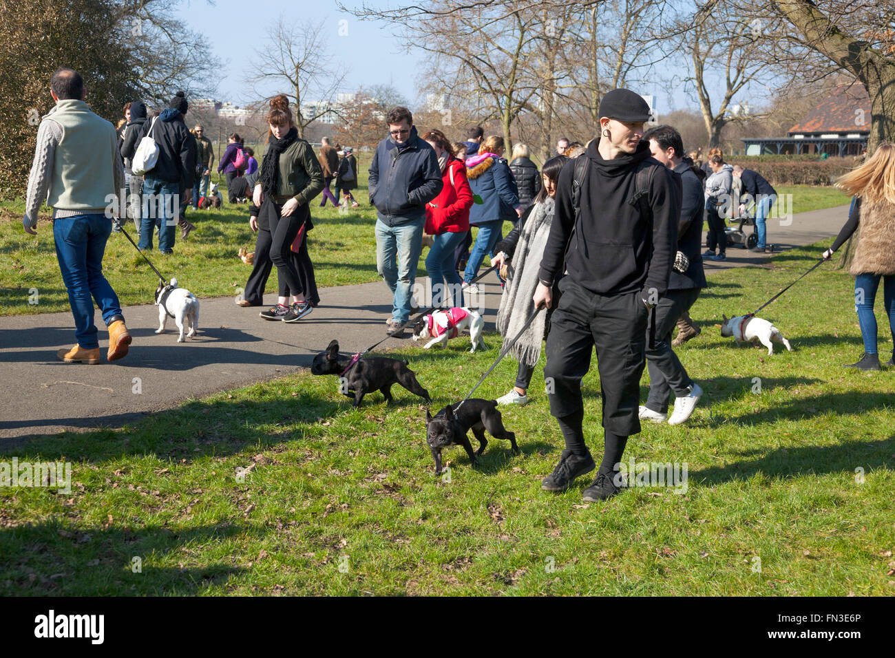 13th March 2016 - Meet-up and Walk of London french bulldog owners in Regent's Park, London, UK - Stock Image