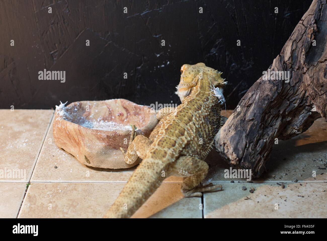 Lizard Cage Stock Photos & Lizard Cage Stock Images - Alamy