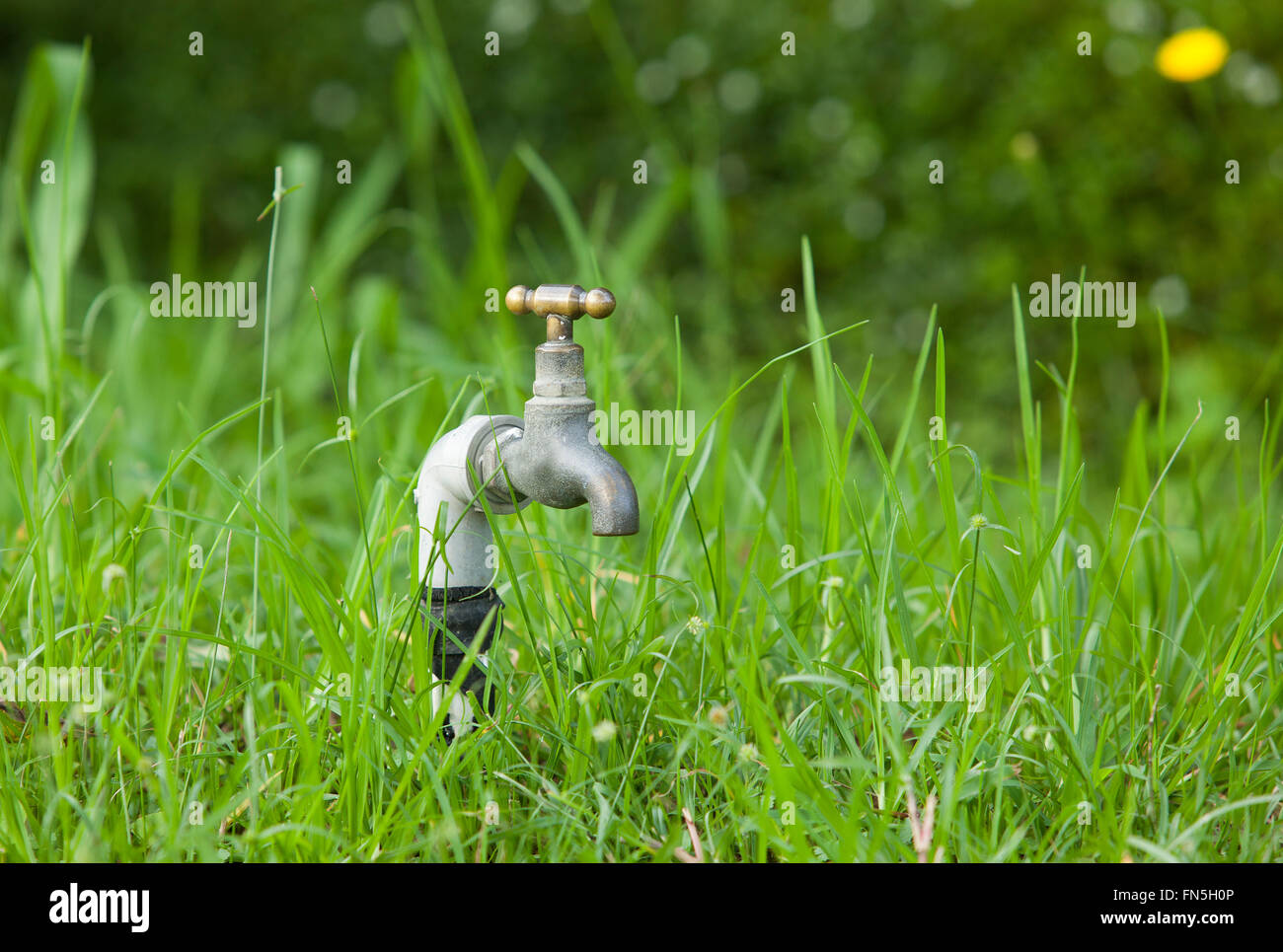 Faucet on green grass garden. No water Stock Photo: 99082726 - Alamy