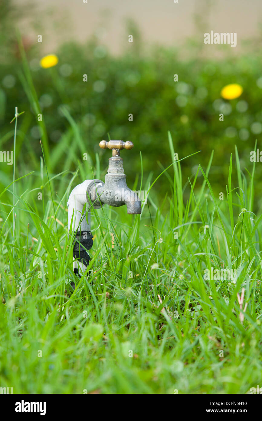 Faucet on green grass garden. No water Stock Photo: 99082732 - Alamy