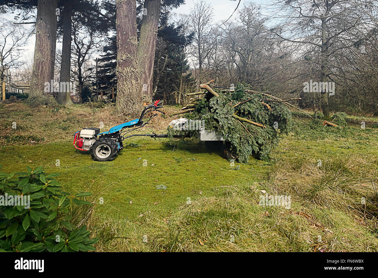 Cleaning up after high wind damage.on small estate. - Stock Image