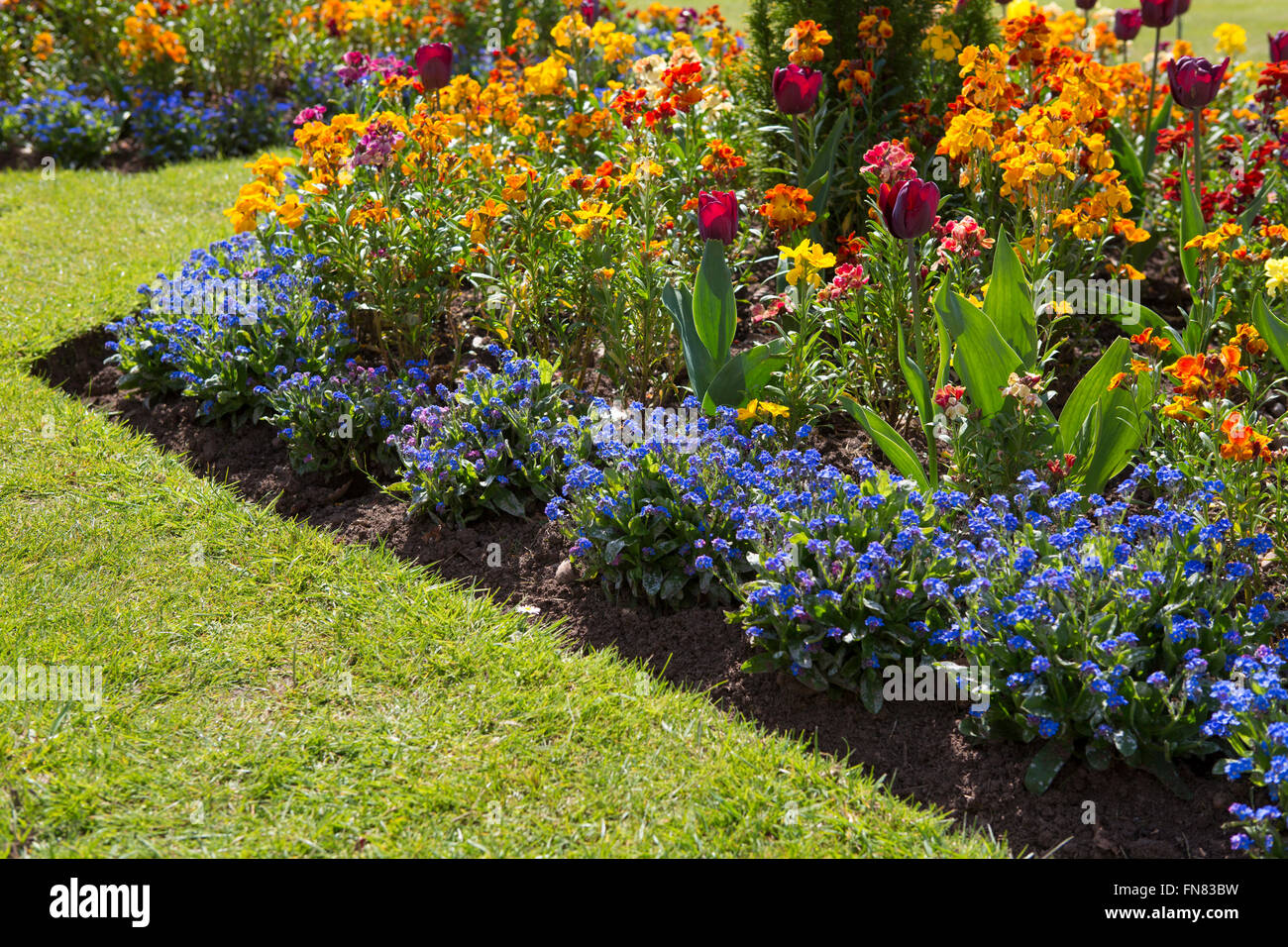 Spring Flowers Decorate Borders Flower Stock Photos Spring Flowers