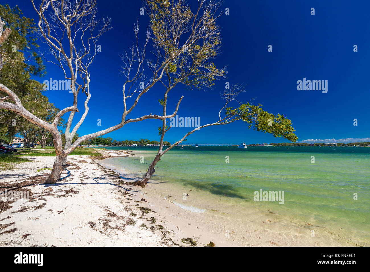 BRIBIE ISLAND, AUS - FEB 14 2016: Beach with trees on the west side of Bribie Island, Queensland, Australia - Stock Image