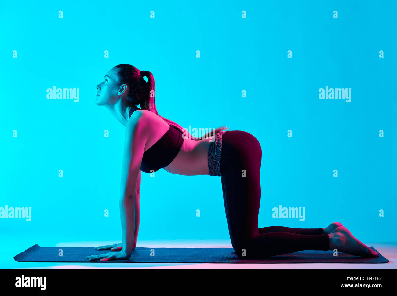 one caucasian woman exercising cat pose yoga exercices  in silhouette studio isolated on blue background - Stock Image