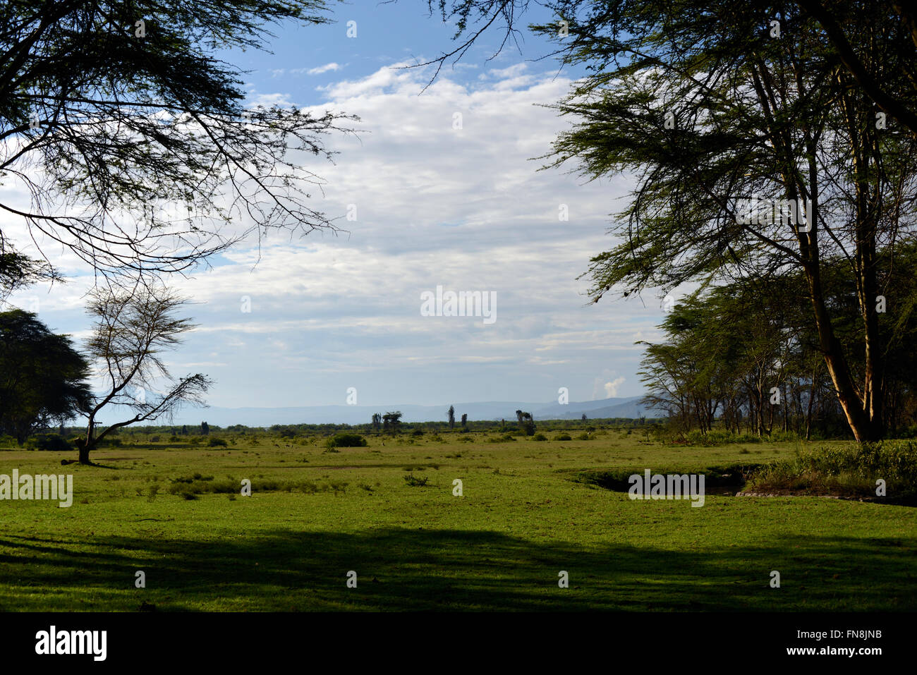 AFRICA: KENYA: Shores of Lake NAIVASHA in the East African Rift Valley with Strato Volcano LONGONOT smoking steam - Stock Image