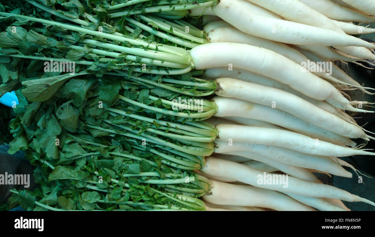 Raphanus sativus var. longipinnatus, Daikon, cultivated vegetable crop with long white root, long pinnately Stock Photo