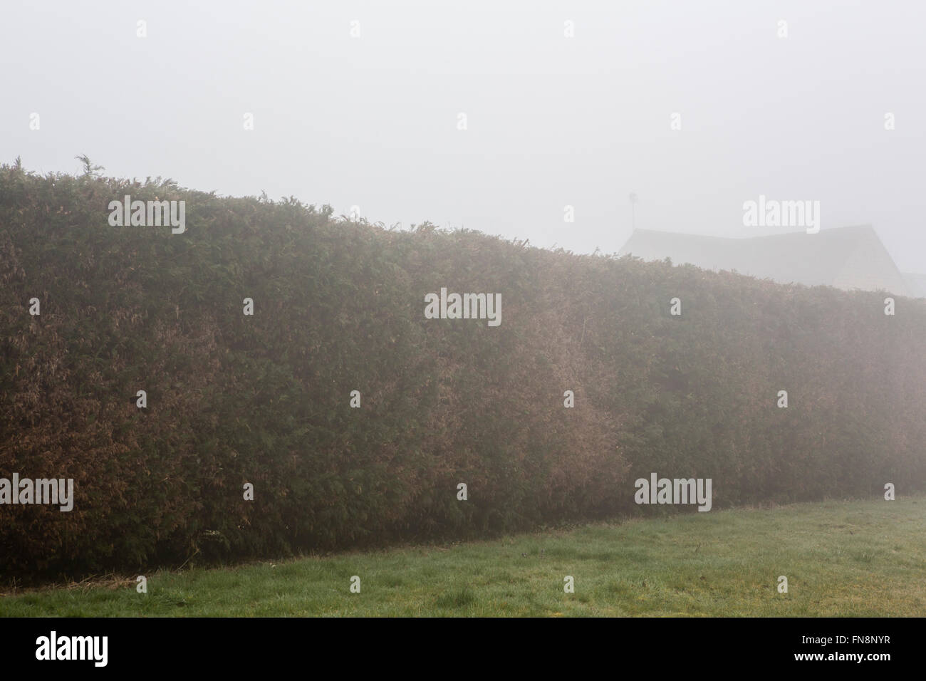 Trees hedges and bushes partially hidden by morning mist or fog in the country. - Stock Image