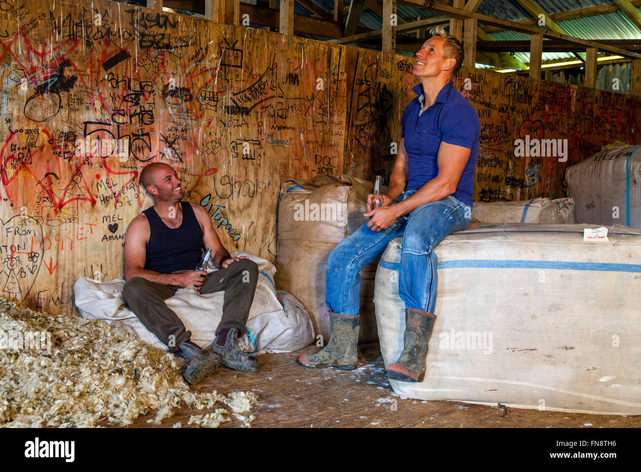 Two Sheep Farmers Relax In The Wool Shed After A Morning Spent Shearing Sheep, Sheep Farm, Pukekohe, North Island, - Stock Image