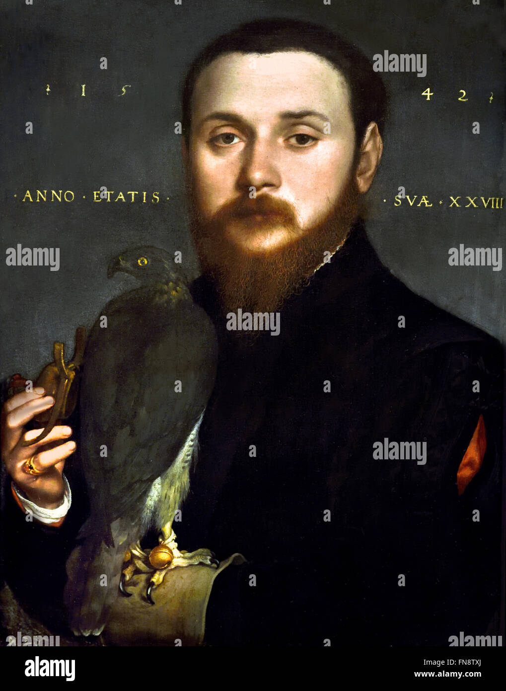 Portrait of a Nobleman with a Hawk 1542 Hans Holbein the Younger  497 - 1543  German Germany - Stock Image