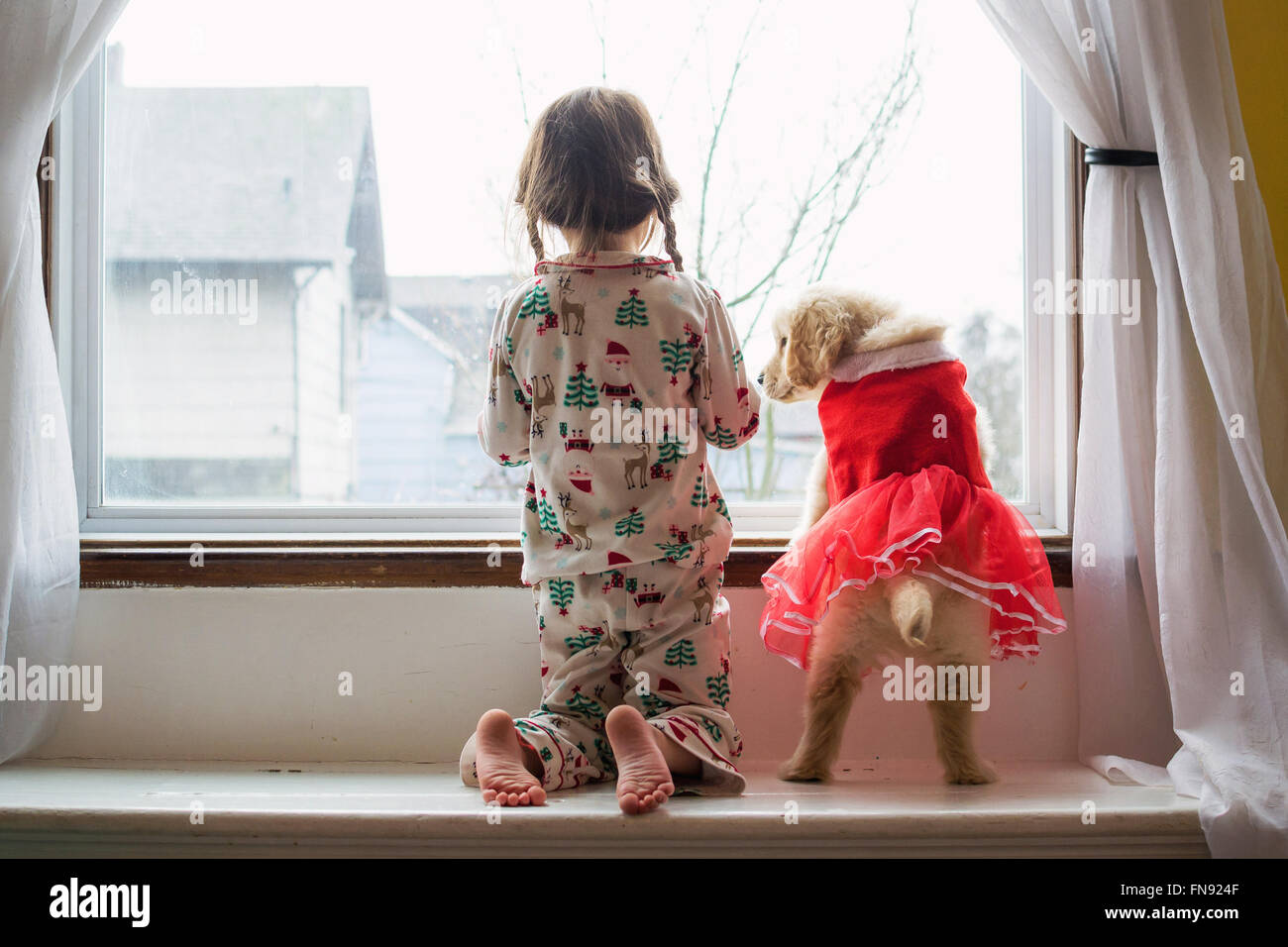Girl in pyjamas looking out the window with golden retriever puppy dog - Stock Image