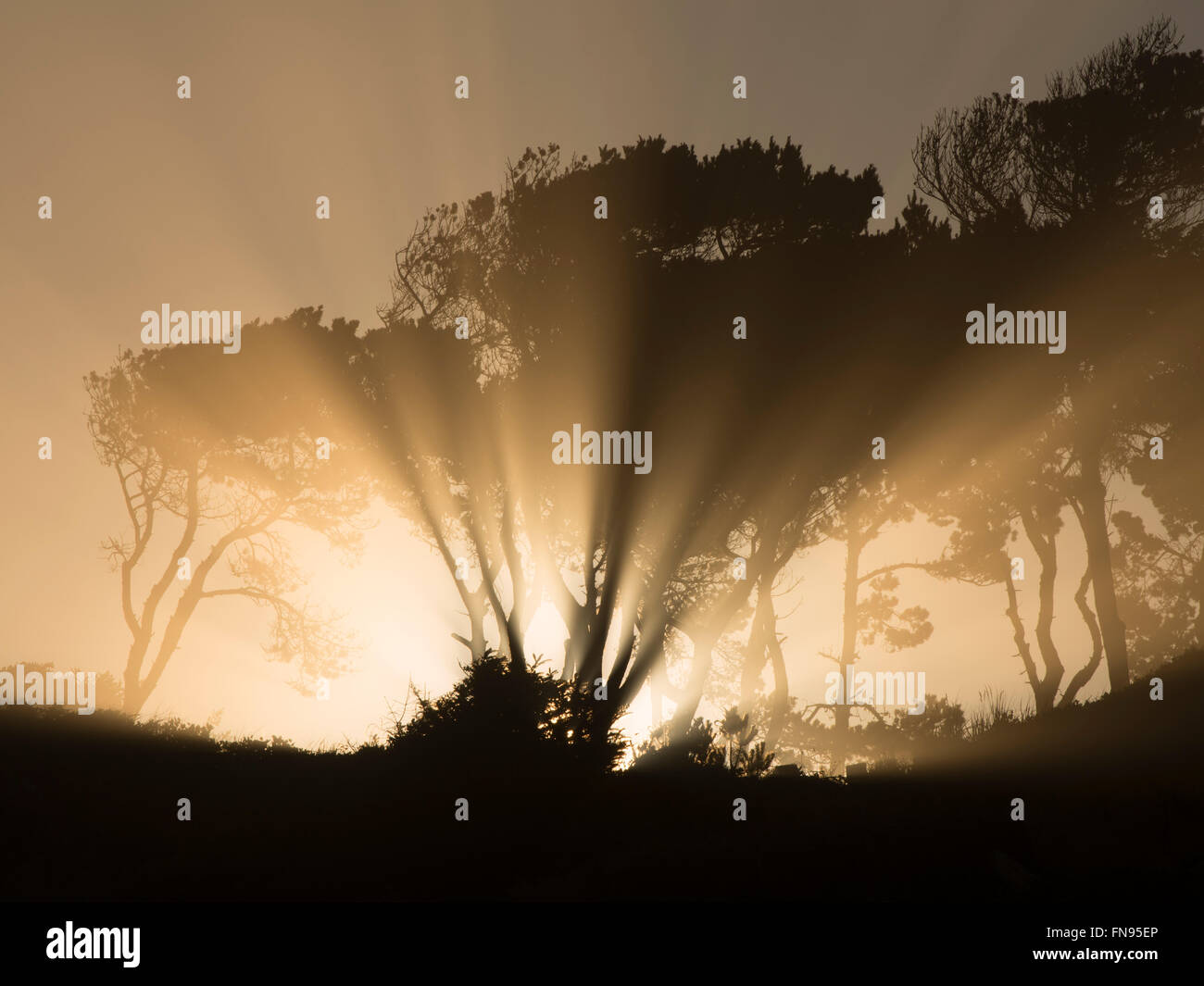 Sunburst  at sunrise through trees at Devil's Punchbowl State Natural Area. Oregon - Stock Image