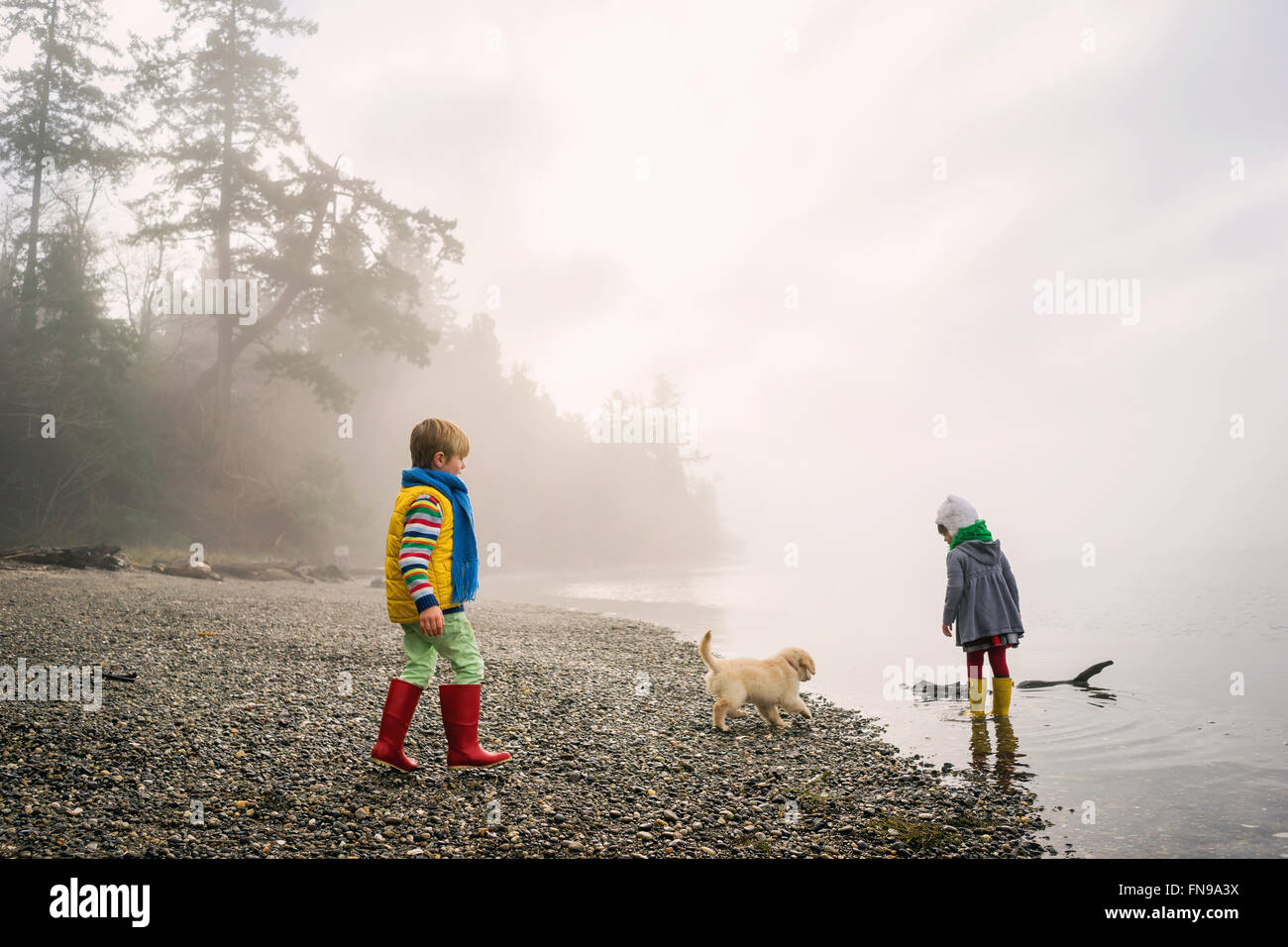 Boy and girl playing with golden retriever puppy dog on foggy beach - Stock Image