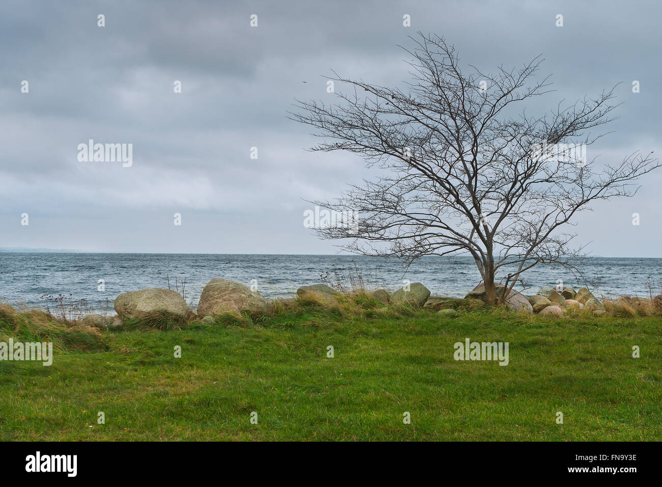 Lonely Leafless Tree at Seashore in Windy Weather - Stock Image