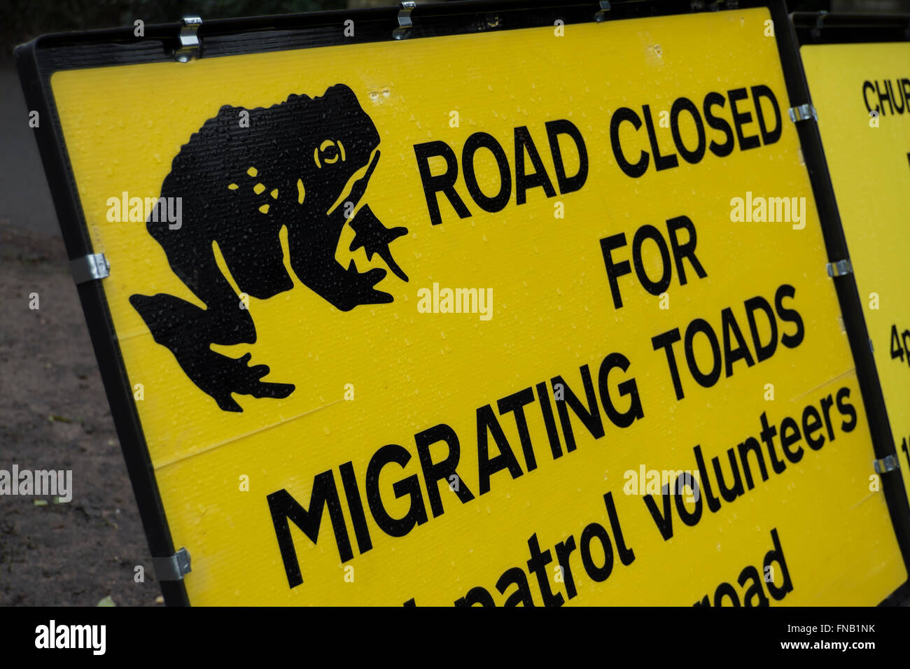road closed for migrating toads signs, ham, surrey, england - Stock Image