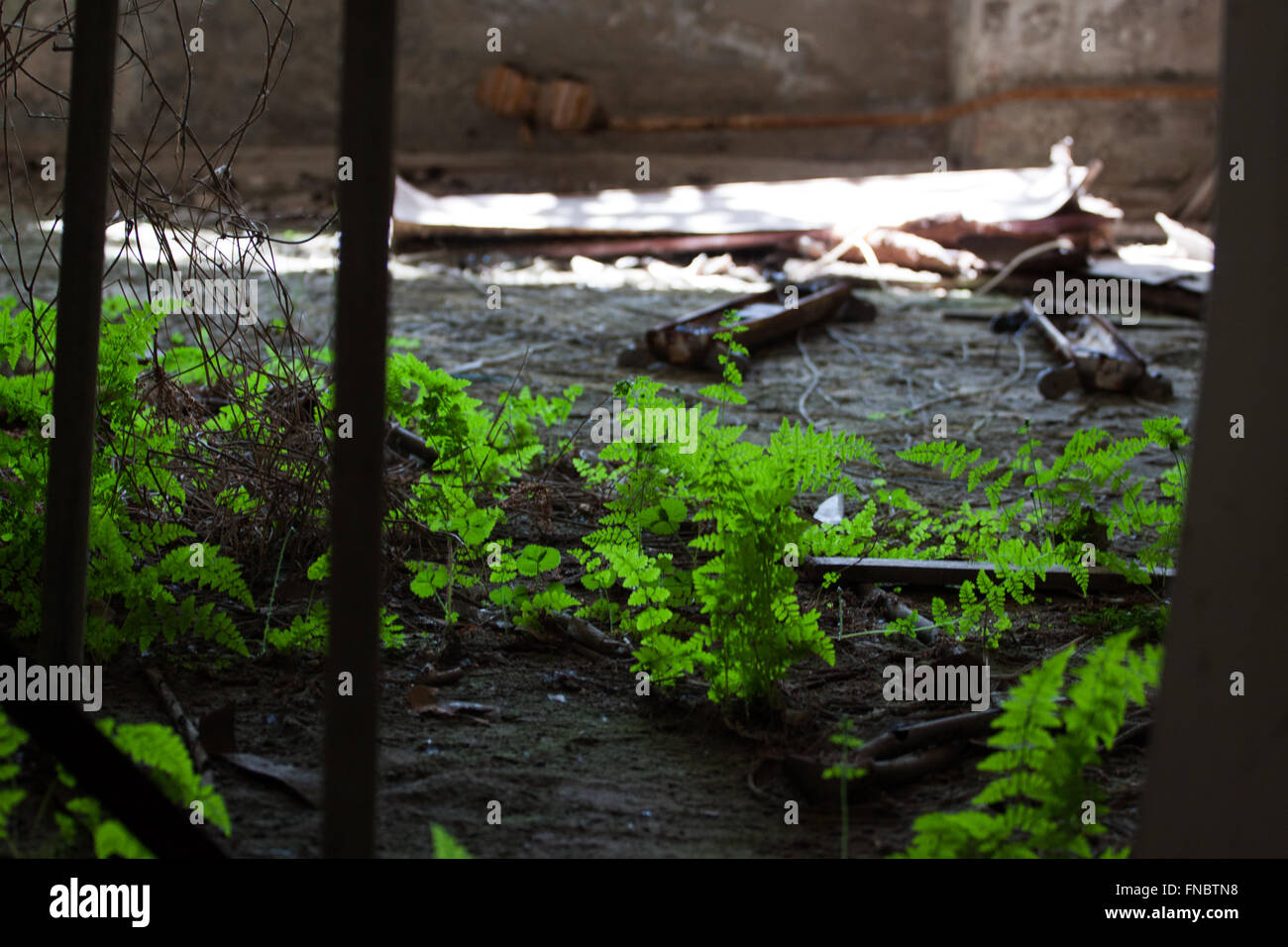 Nature takes over Chernobyl years after nuclear disaster Stock Photo