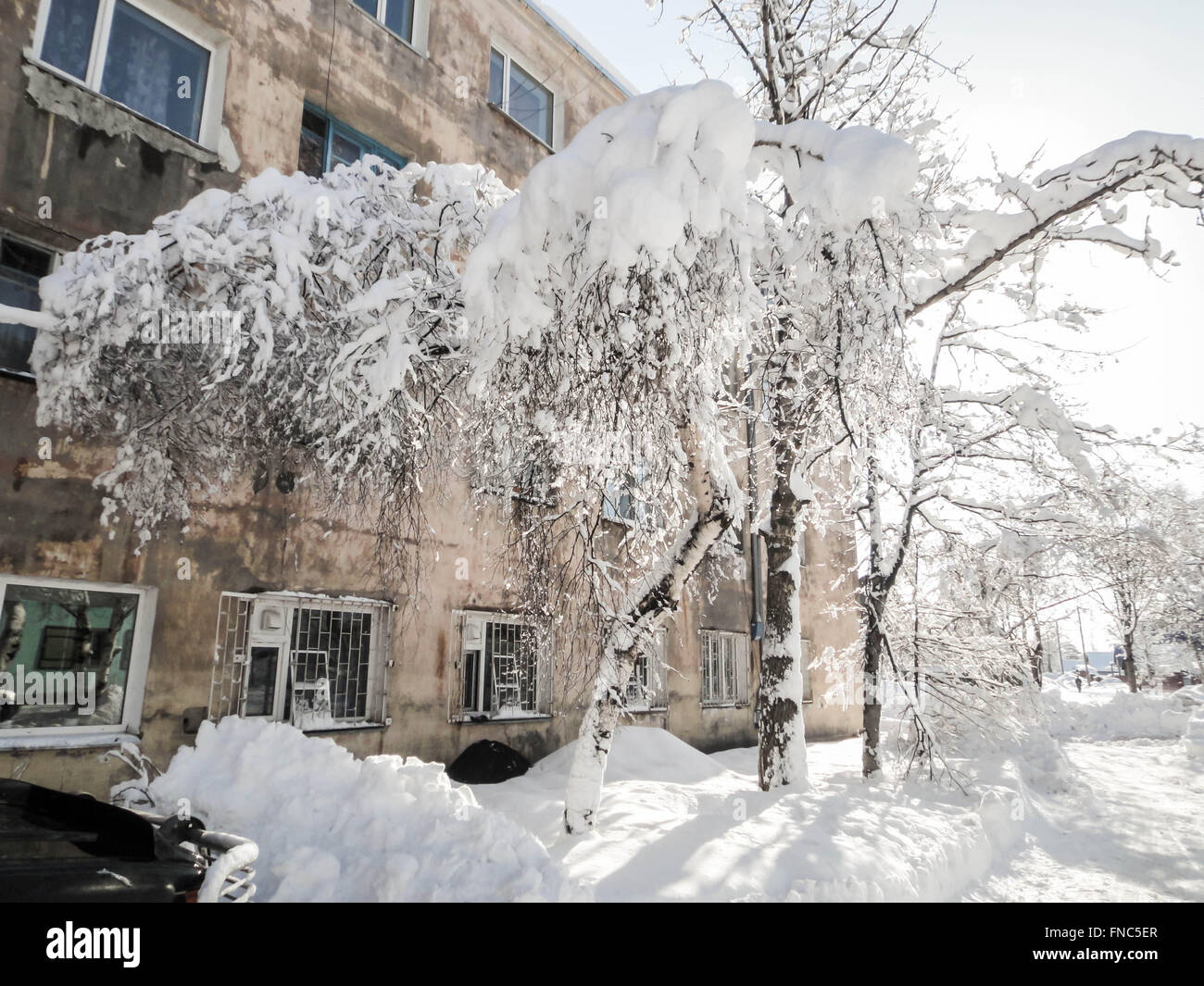 Big snow cover on a small tree - Stock Image