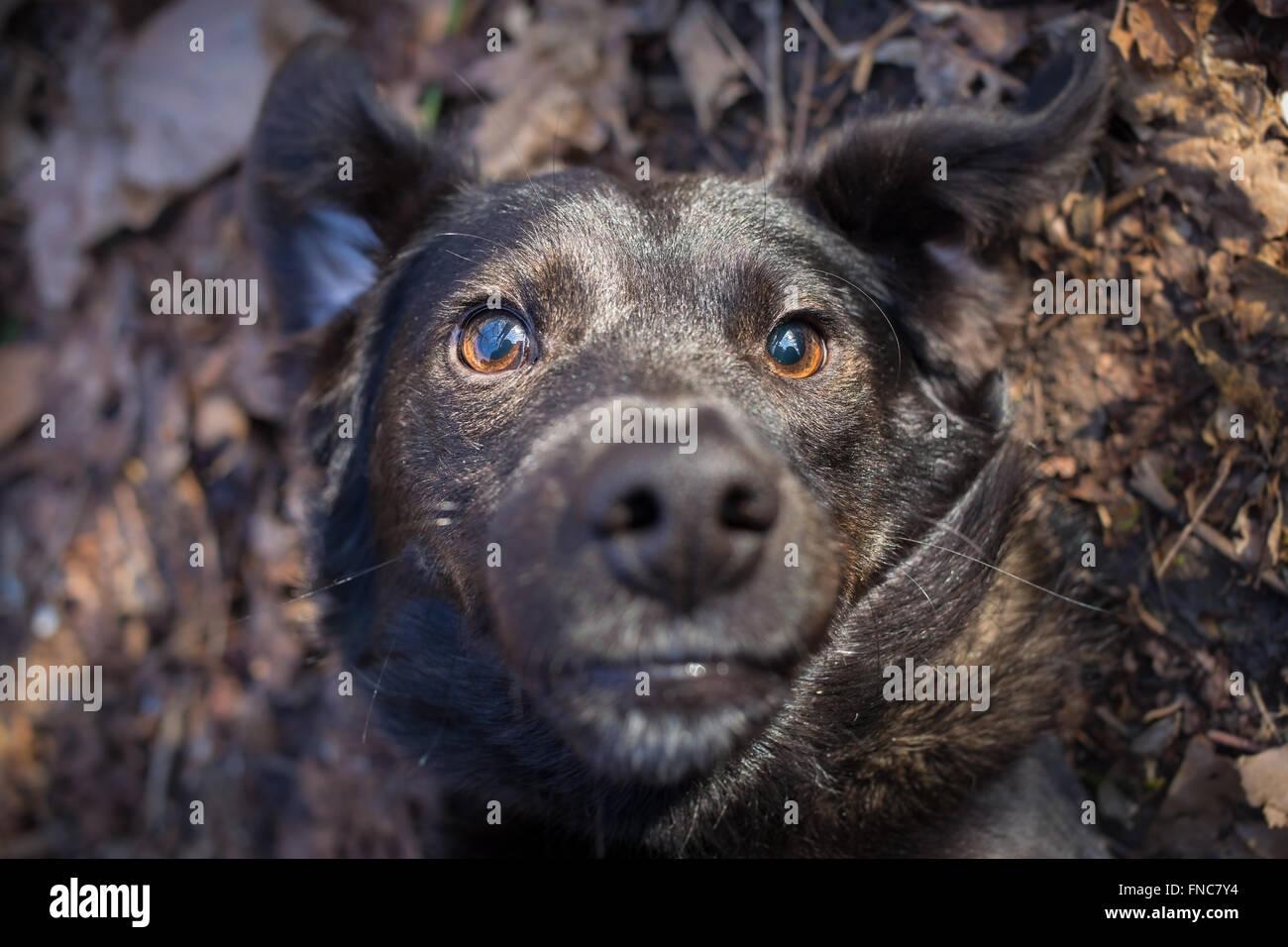 Mixed breed dog selfie photo - Stock Image