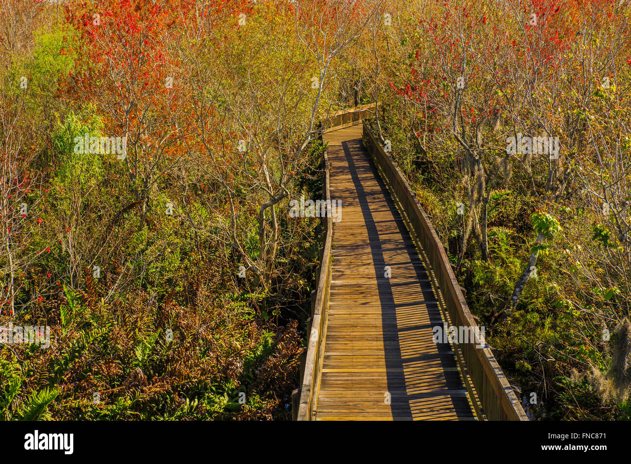 Through the Woods - Boardwalk at Sawgrass Lake Park from observation deck - Stock Image