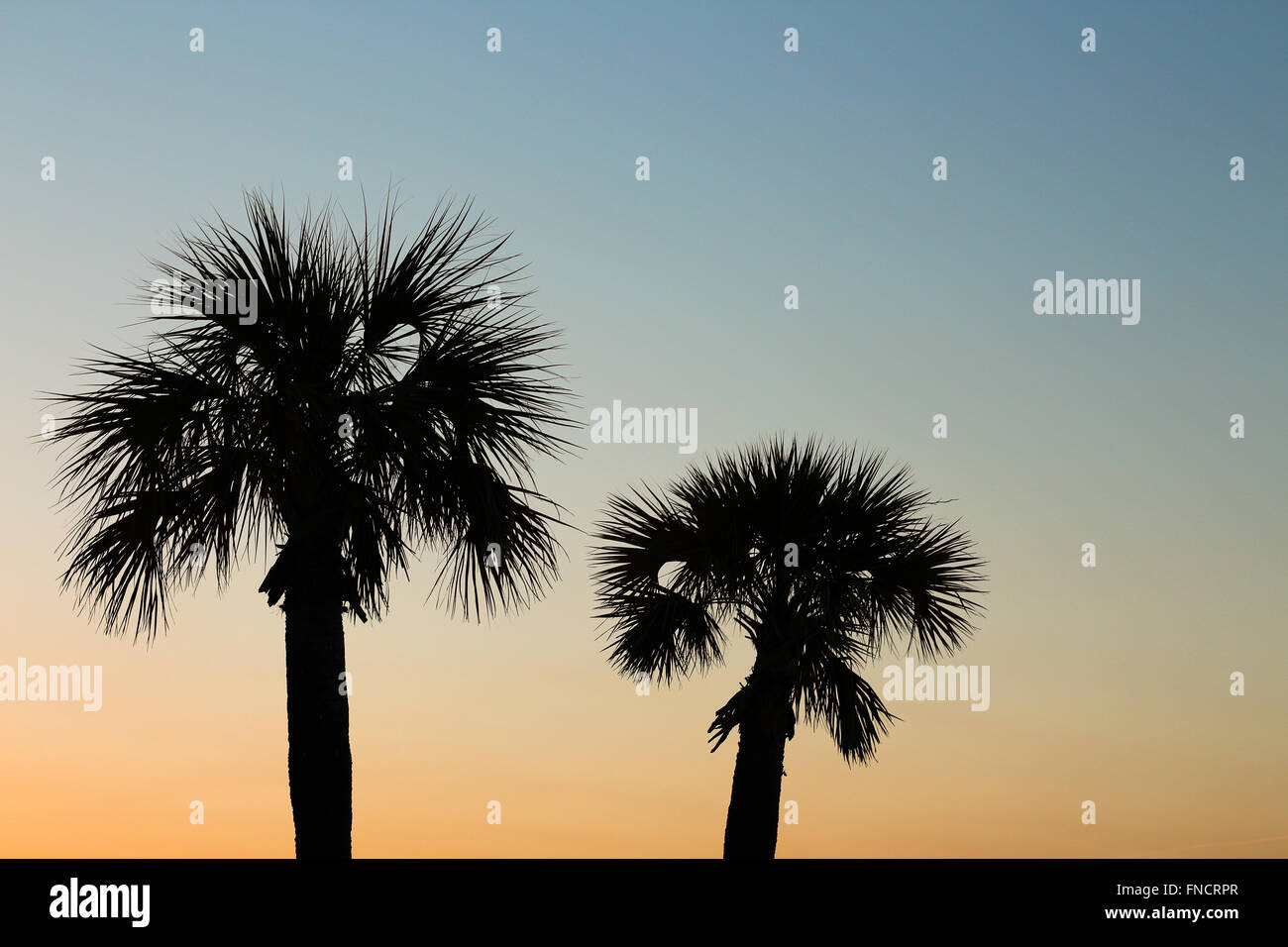 A silhouette of two palm trees taken on the beach at sunset. Stock Photo
