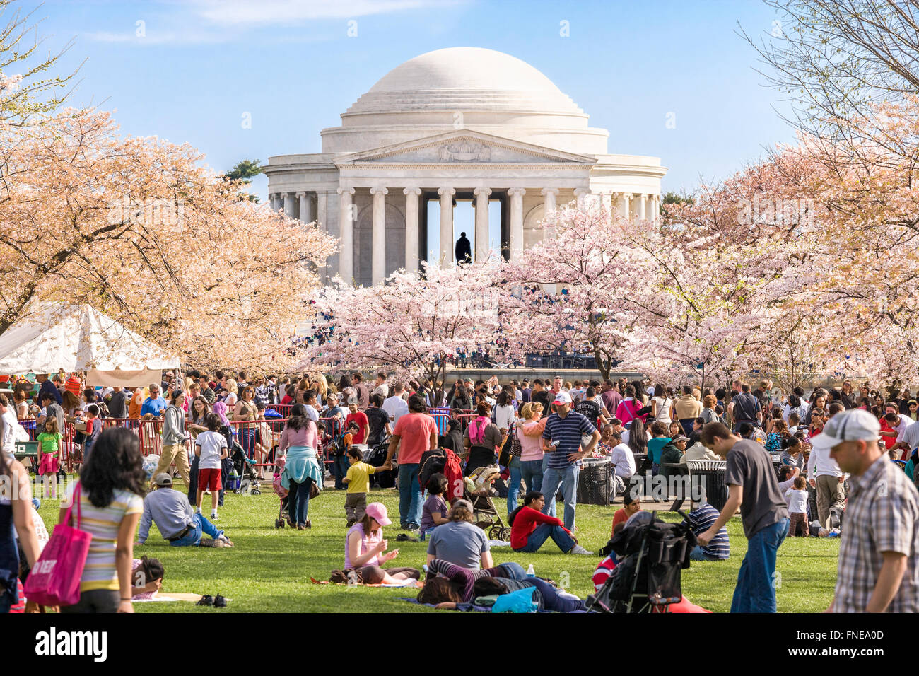 Washington DC Cherry blossoms Jefferson Memorial. Crowds on Sunday Cherry Blossom Festival. - Stock Image