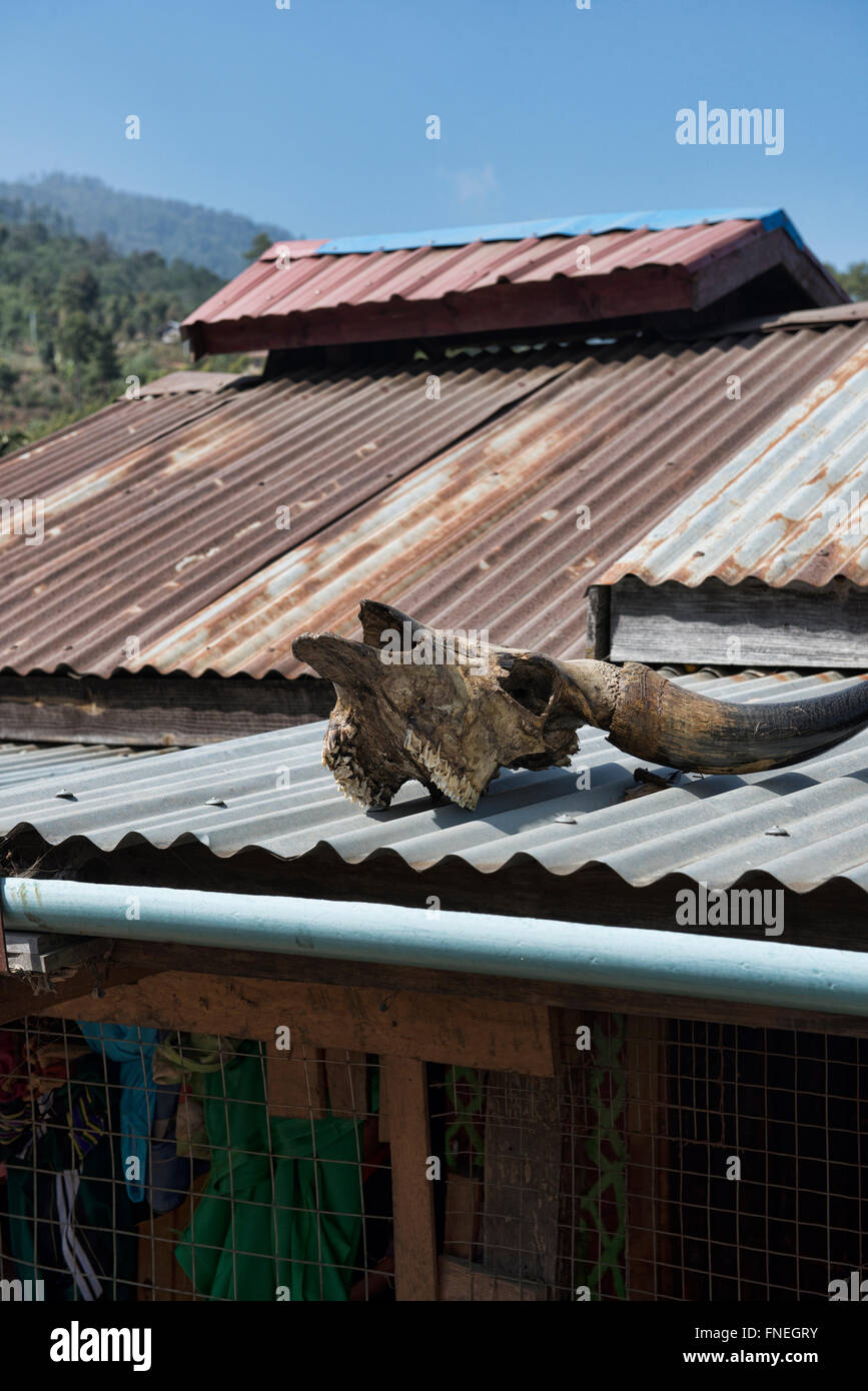 Water buffalo skull on a roof, local belief in Mindat, Chin State, Myanmar - Stock Image