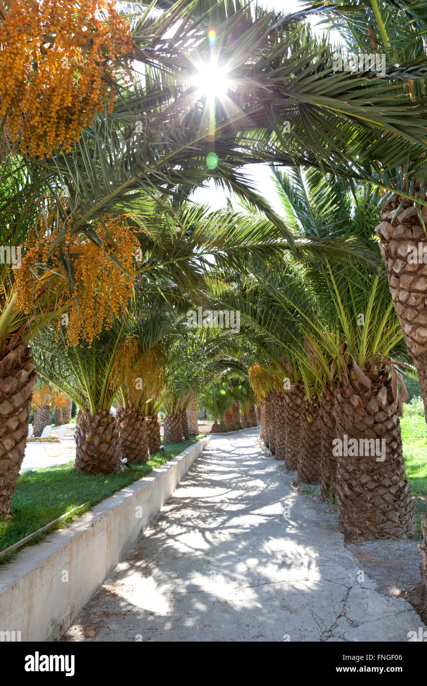 Lane with palmtrees in sunlight - Stock Image