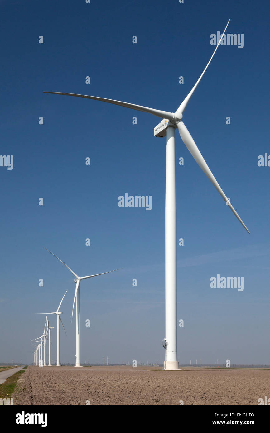 Windmills on the Eemmmeerdijk in Holland - Stock Image