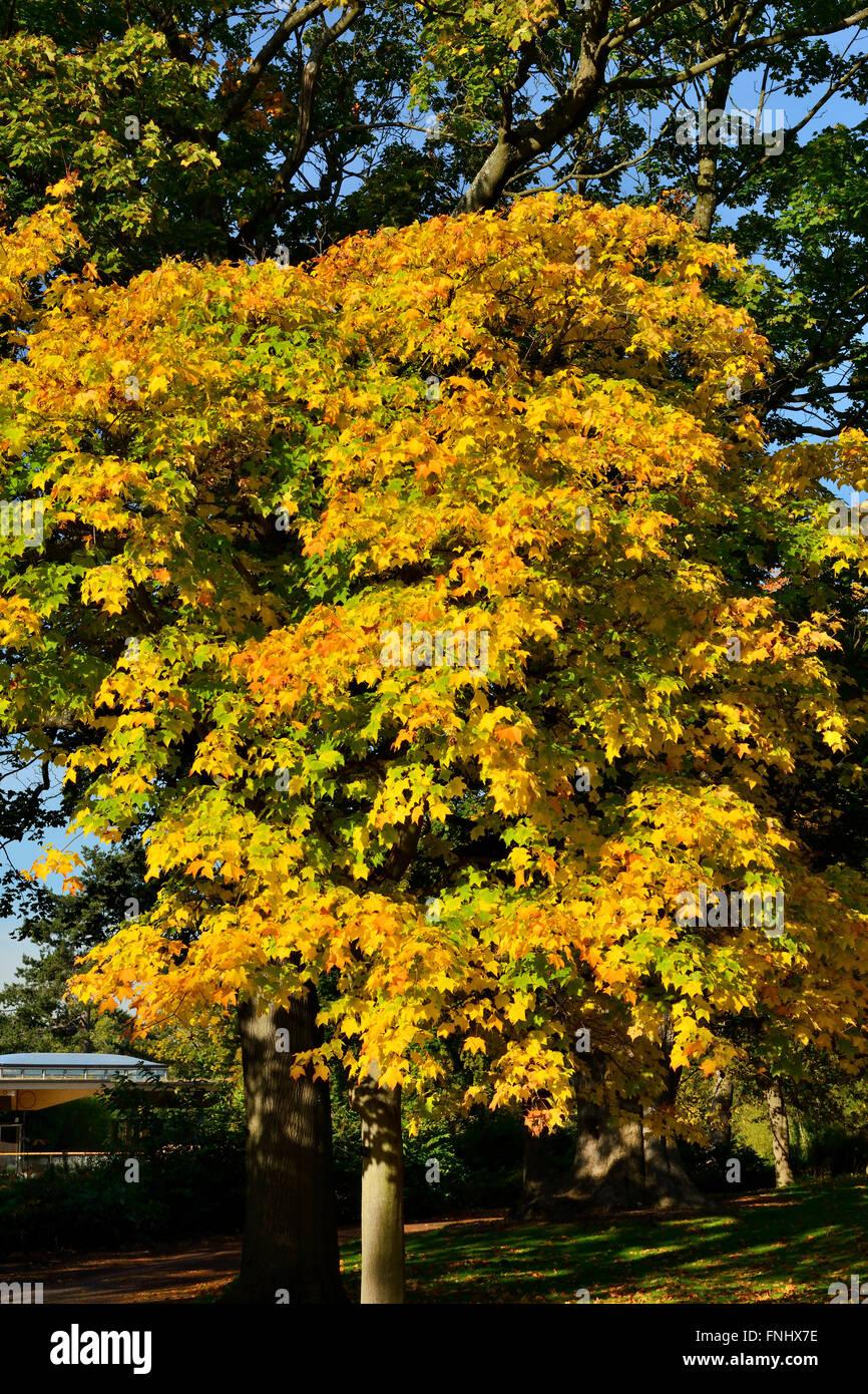 Autumn colours, Royal Botanic Garden, Edinburgh, Scotland, UK - Stock Image