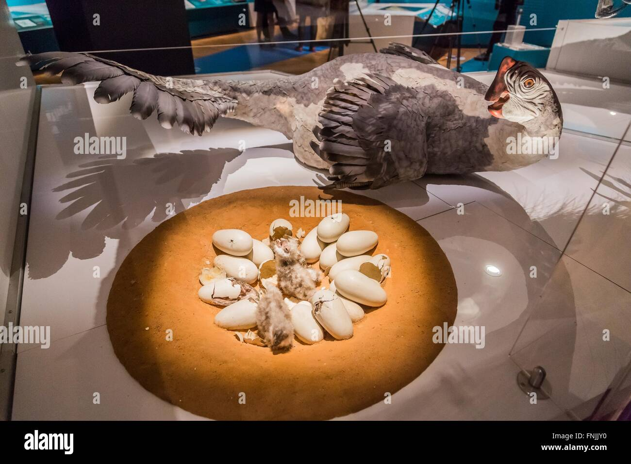 "(160315) -- NEW YORK, March 15, 2016 (Xinhua) -- Photo taken on March 15, 2016 shows the model of the dinosaur ""Citipati Stock Photo"