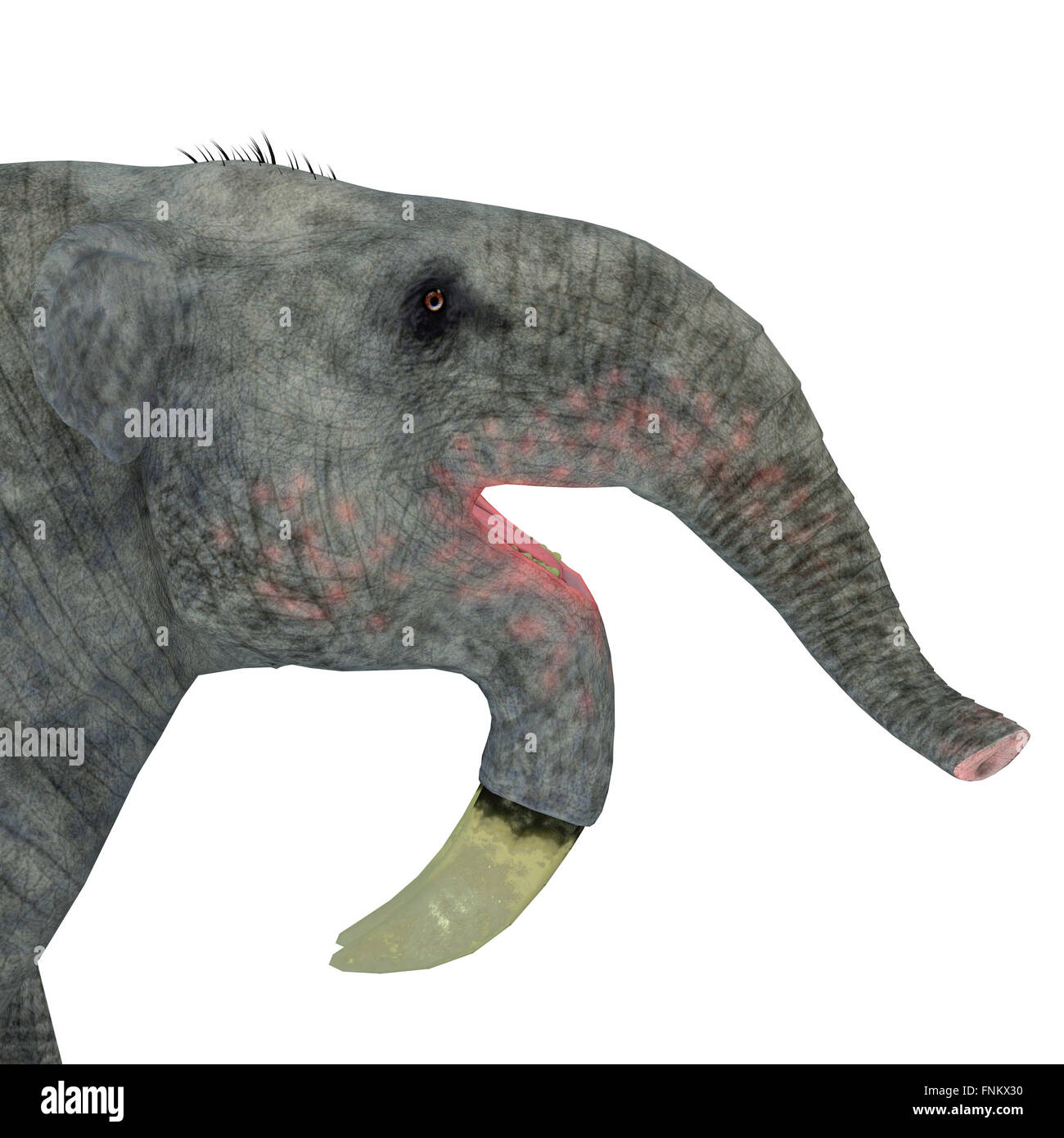 Deinotherium was an enormous land mammal that lived in Asia, Africa and Europe during the Miocene to Pleistocene - Stock Image