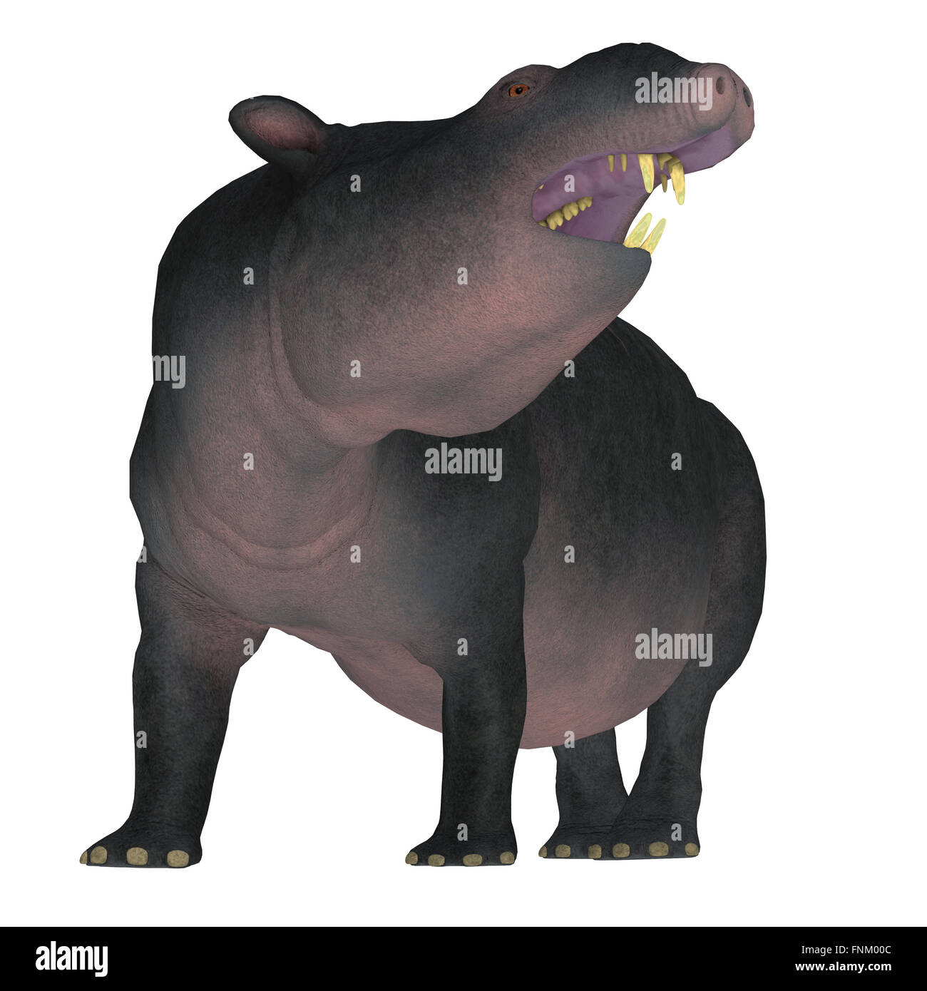 Moeritherium is an extinct mammal related to the elephant and the sea cow. This herbivore lived in Egypt. - Stock Image