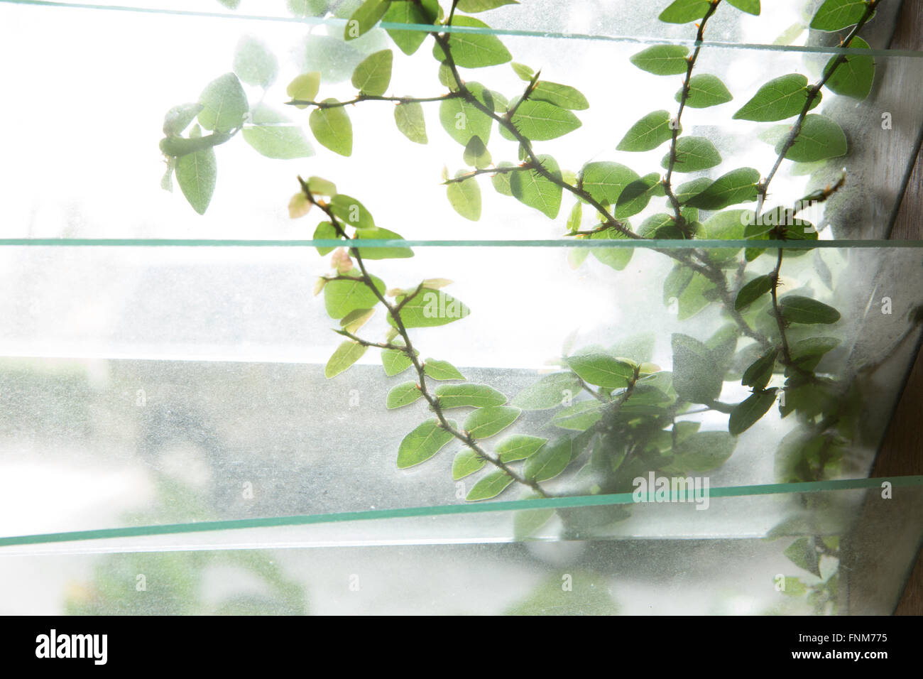 Tropical greenery outside a glass window in lush humid climate in Penang, Malaysia - Stock Image