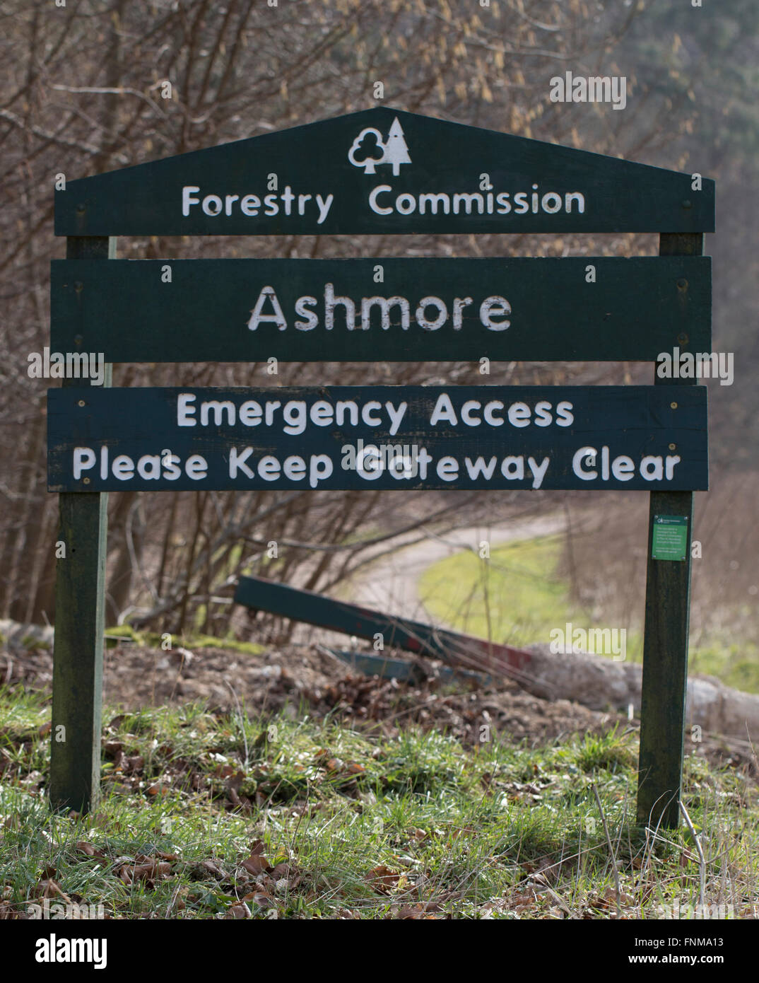 Ashmore Forest Forestry Commission Sign - Stock Image