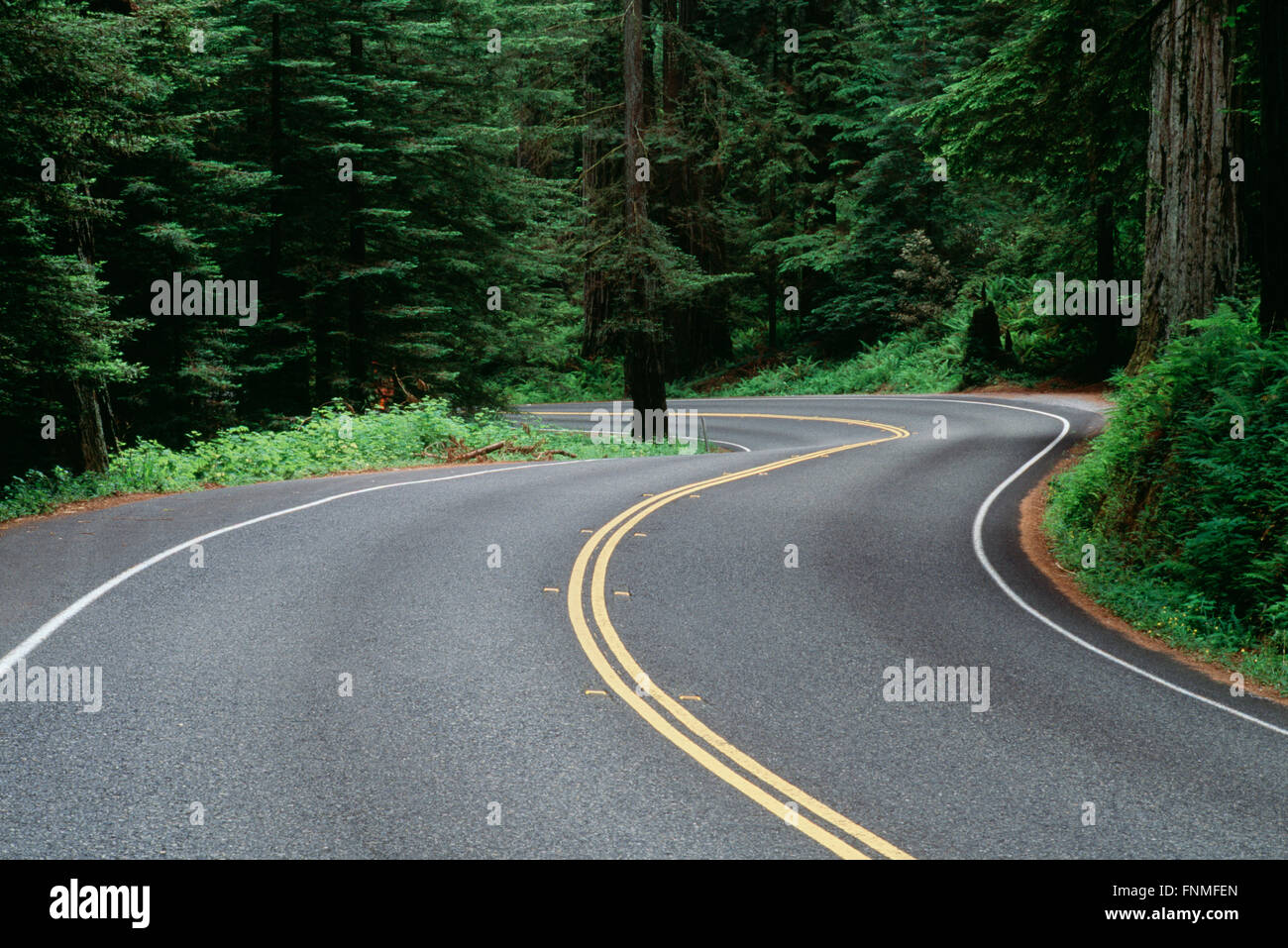 Winding Road through a Forest, Jedediah Smith Redwoods State Park, California, USA - Stock Image