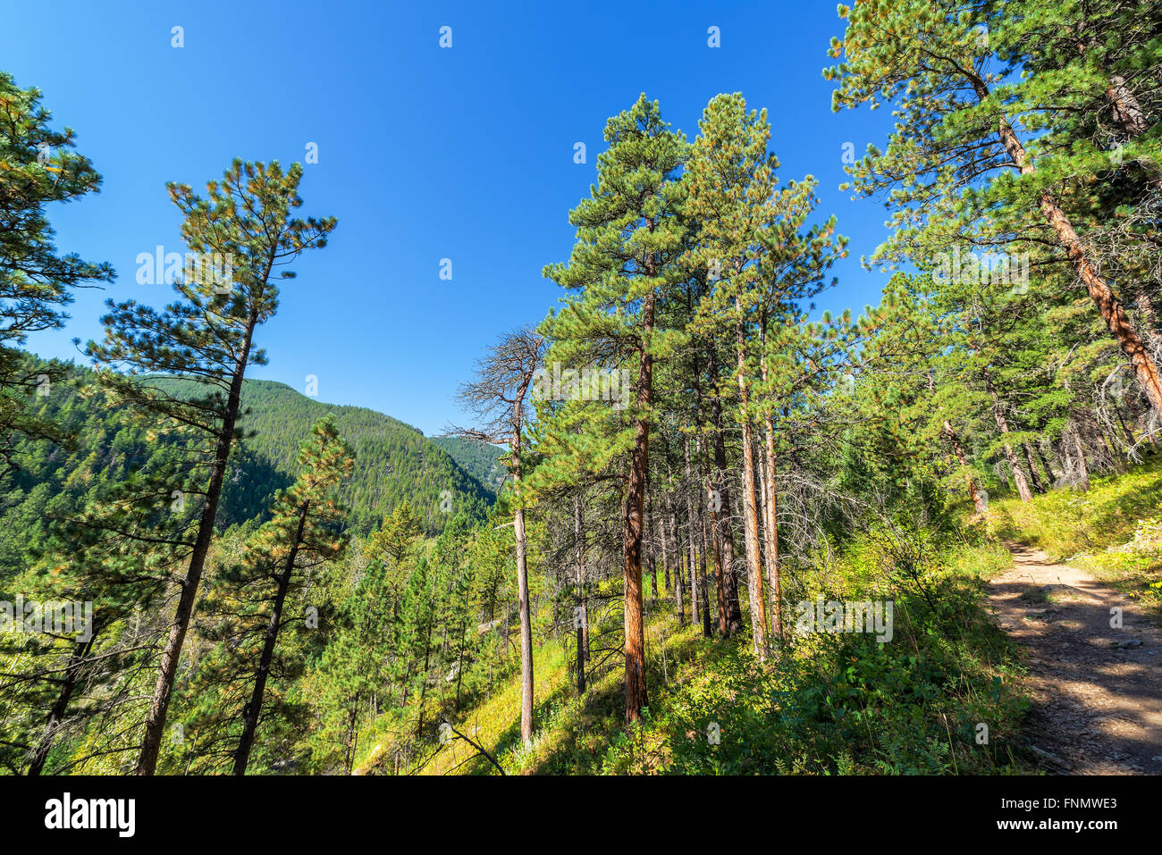 Hiking trail in South Piney Canyon near Story, Wyoming - Stock Image