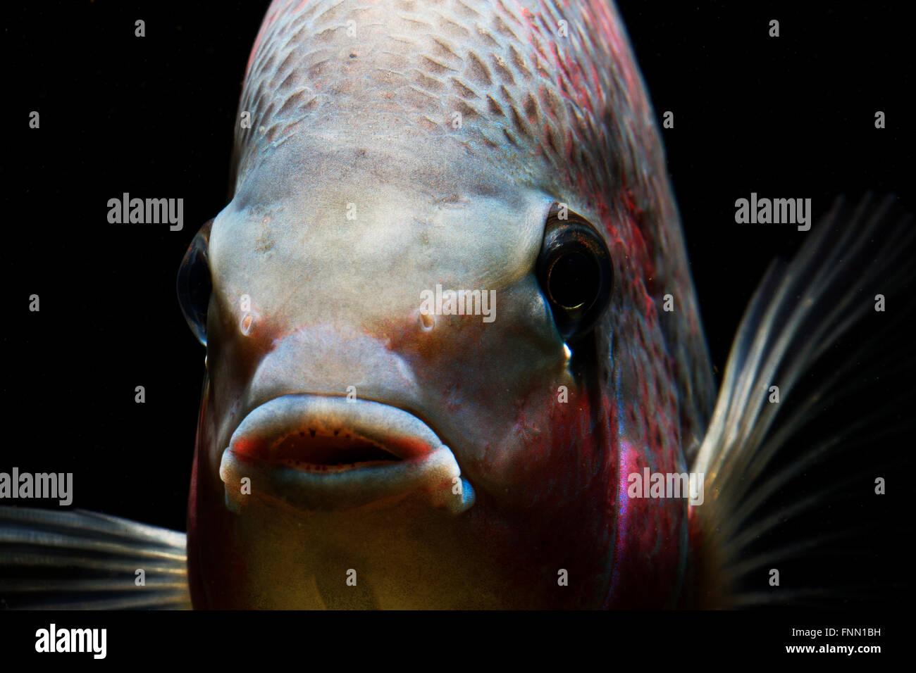 Vieja Fish Stock Photos Vieja Fish Stock Images Alamy