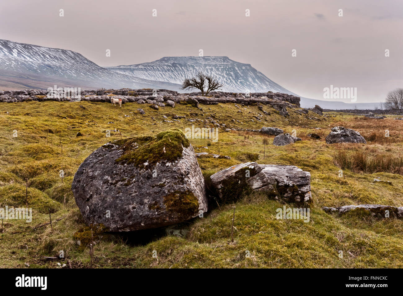 A Winter view of Ingleborough hill, Ingleton, North Yorkshire, UK. - Stock Image