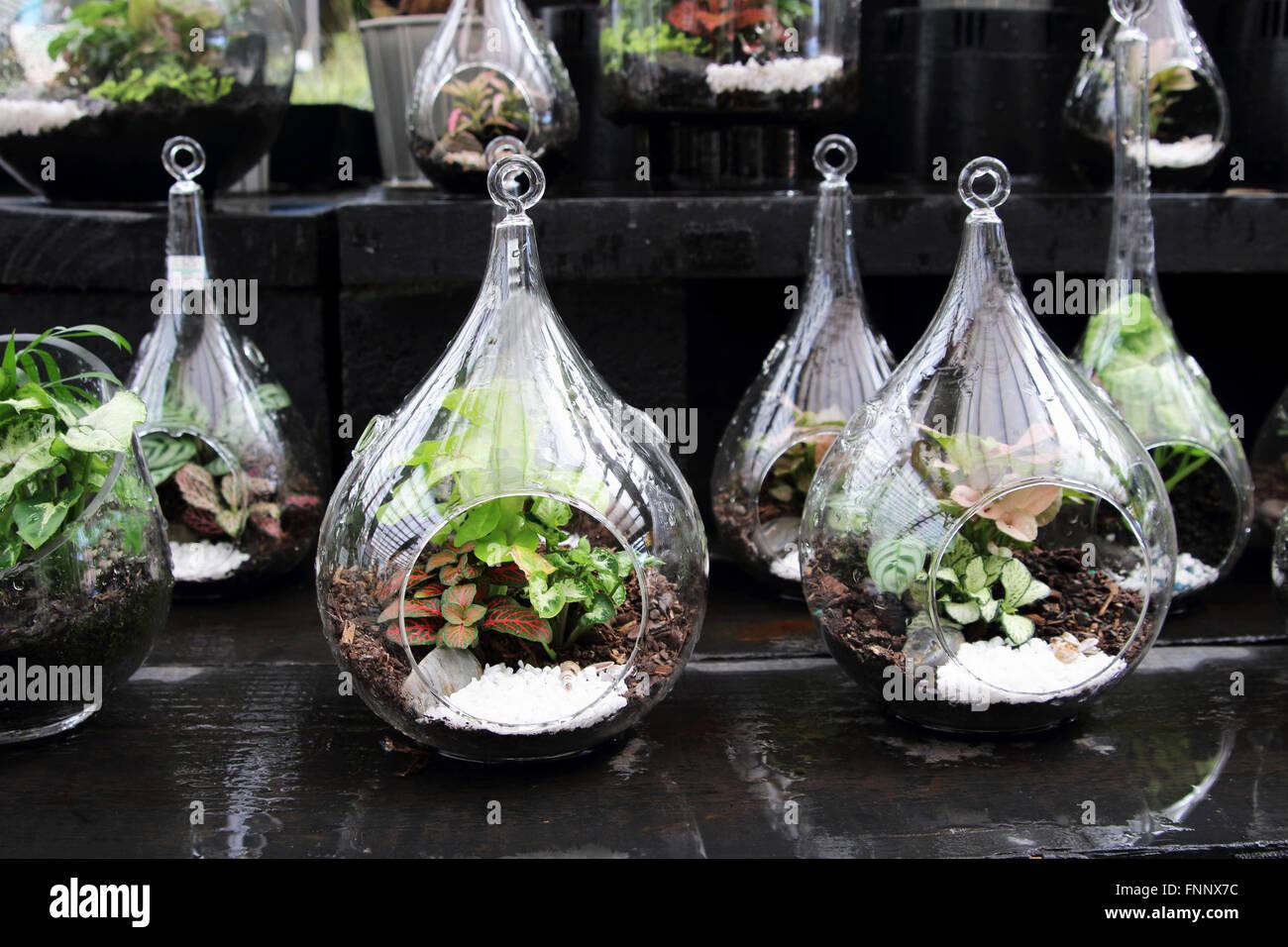 Terrariums With Plants Inside Glass Jar Stock Photo 99441200 Alamy