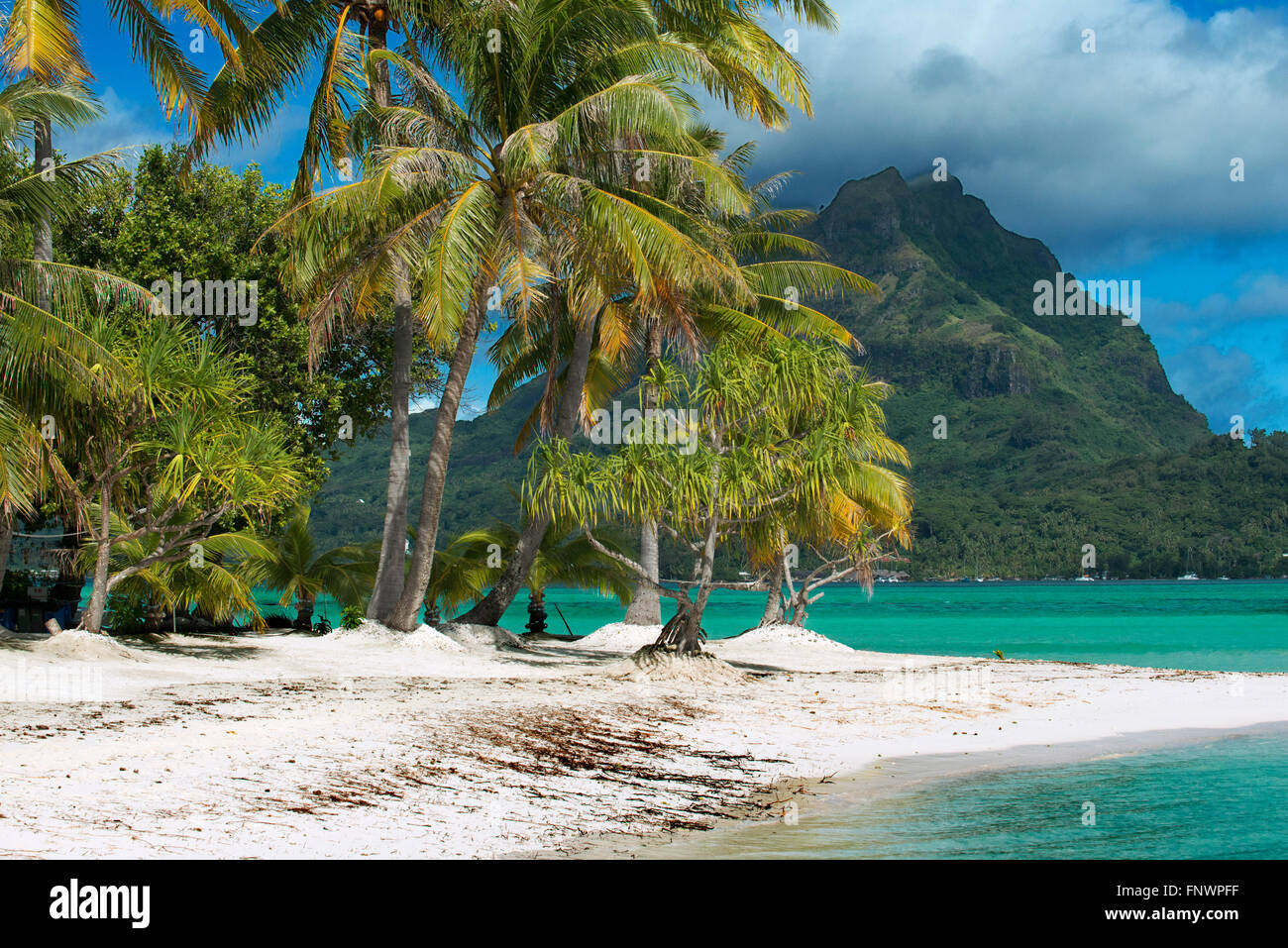 Beach of motu Tapu, a little islet in the lagoon of Bora Bora, Society Islands, French Polynesia, South Pacific. - Stock Image