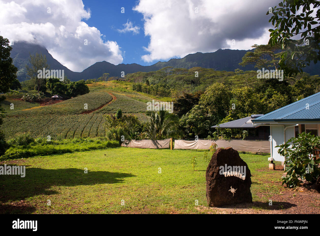A pineapple farm on the island of Moorea, with mountains rising in the distance. French Polynesia, Society Islands, - Stock Image