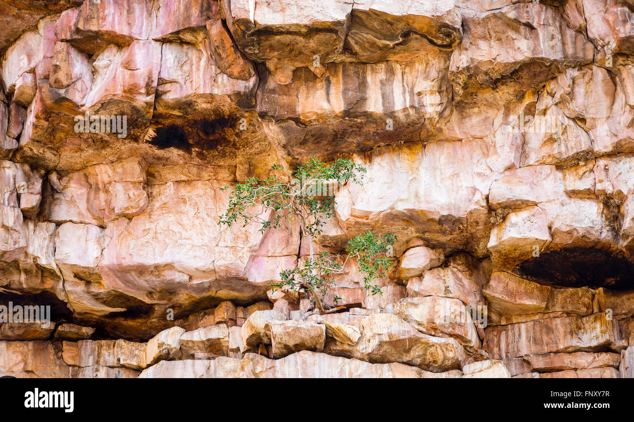 Green tree grows against the odds on a barren rocky cliff face - Stock Image