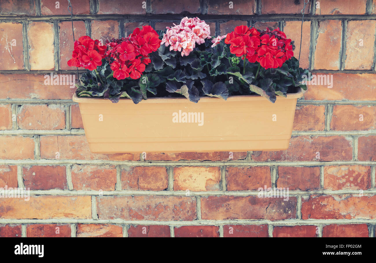 Decorative flowers in outdoor box hanging on red brick wall. Vintage ...