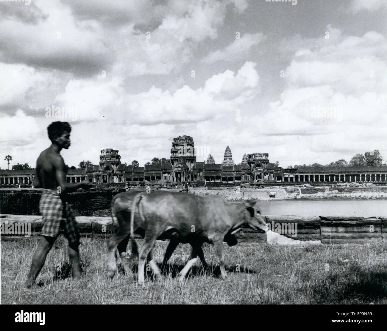 1962 - Life as Usual: A farmer near Siem Reap, Cambodia, is not impressed with Angkor Wat, the fantastic temple Stock Photo