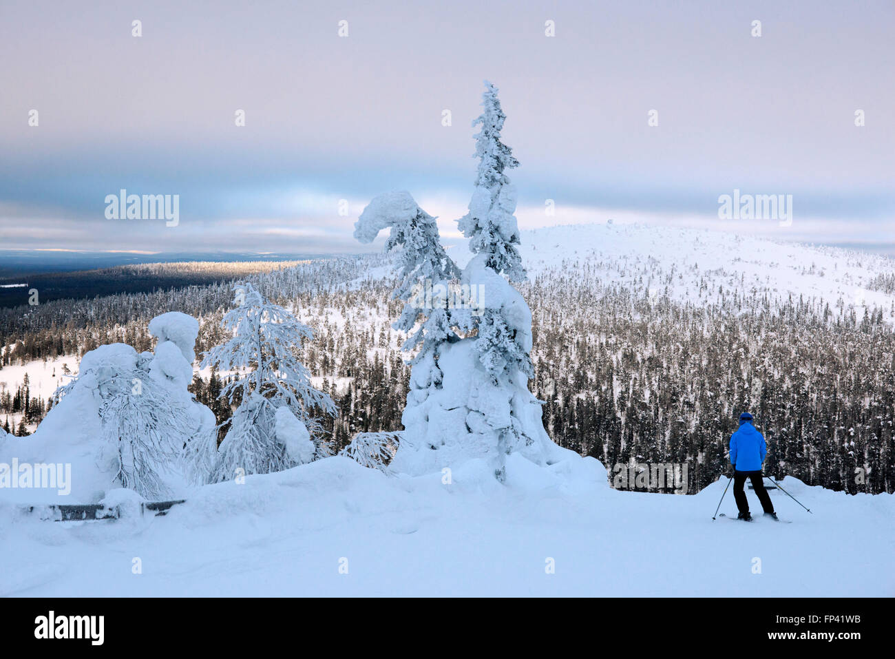 Heavy snow on the Salla fell. Salla ski resort. Deep in the wilderness of heavily snow laden coniferous trees and - Stock Image
